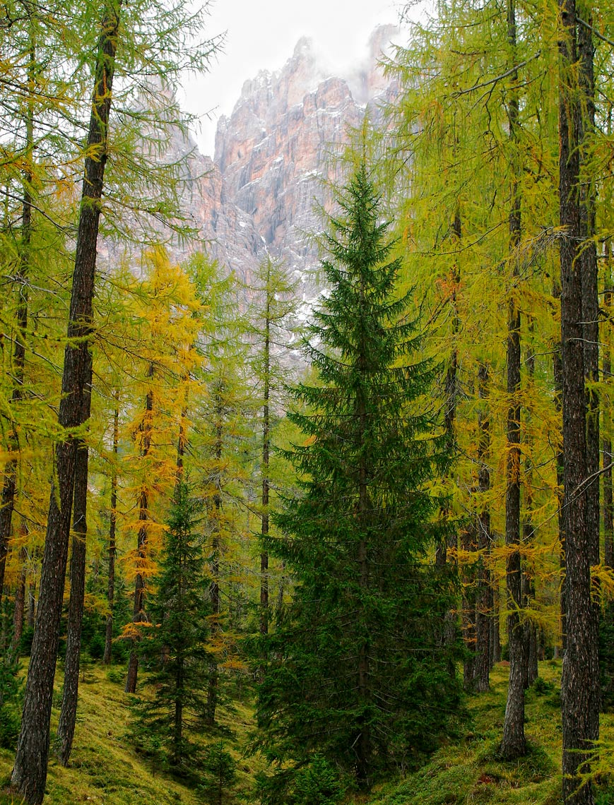 Dolomite Forest - Italy