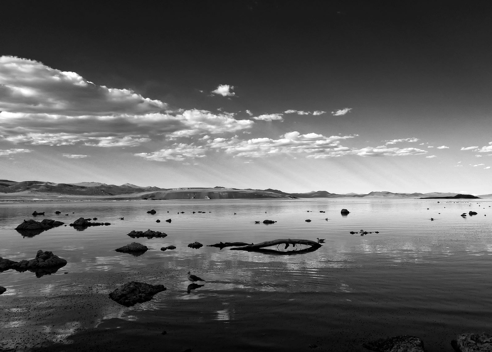 Mono Lake, CA - Black & White