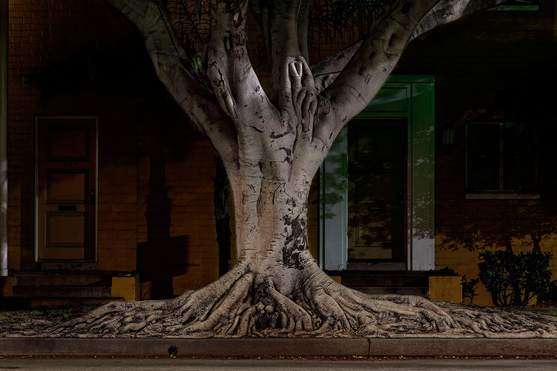Nocturnal-Botanica-Tree-Roots-copy